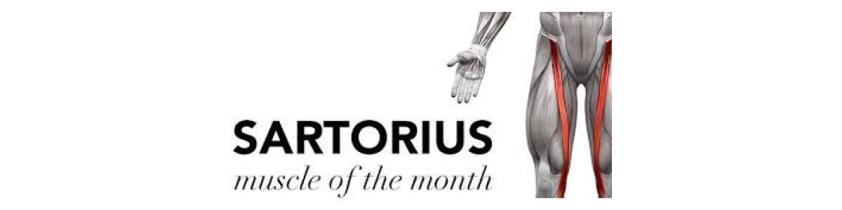 SARTORIUS VZ